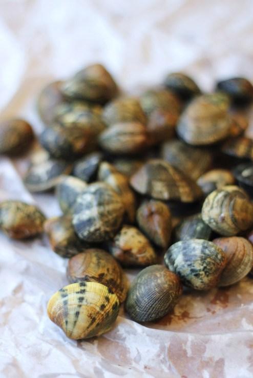 clams3